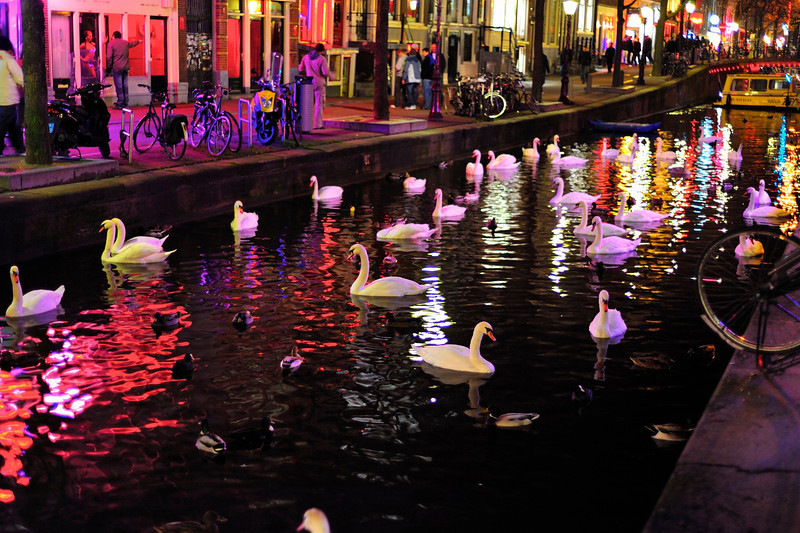 http://sailronin.smugmug.com/Travel/Amsterdam/Swans-at-night/890929517_yofHL-L.jpg